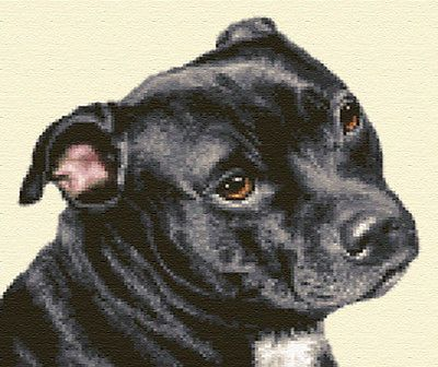 dog ~ full counted cross stitch kit STAFFORDSHIRE BULL TERRIER PUPPY
