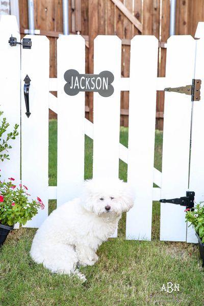Simple Step By Step Dog Gate Tutorial In 2020 Diy Dog Gate Dog Gate Diy Dog Stuff