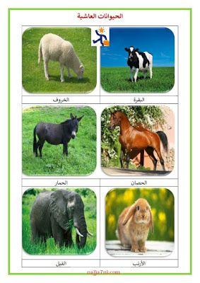 بحث حول الحيوانات اللاحمة و العاشبة و الكالشة التغذية عند الحيوانات Animals Blog Blog Posts