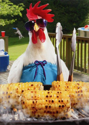 Avanti Rooster Grill Master Funny Masculine Birthday Card 12615739169 Ebay Chicken Humor Cute Chickens Fancy Chickens