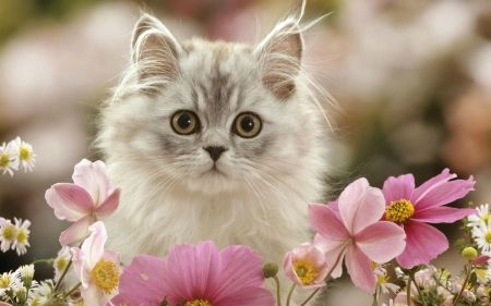 Spring Kitten Cats Wallpaper Id 2353281 Desktop Nexus Animals