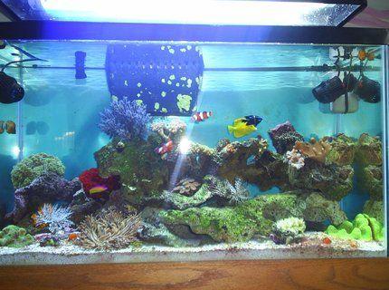 Pin On Salt Water Fish Tank