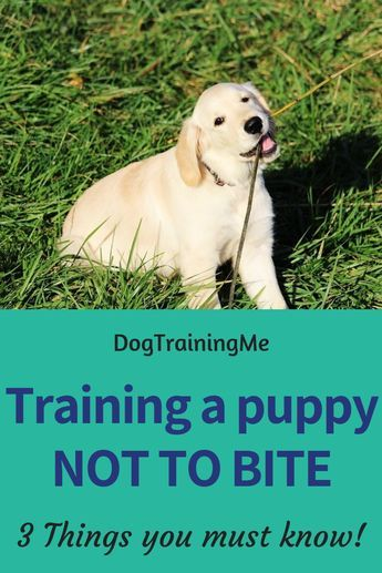 How To Get A Puppy To Stop Biting Puppy Training Dog Training