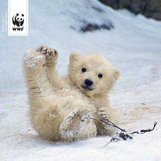 Liegt Bei Euch Auch Schon So Viel Schnee Dass Es Fur Eine Rutschpartie Reicht Schnee Schneezauber Schneeflocke Tierbabys Bilder Tiere Babytiere