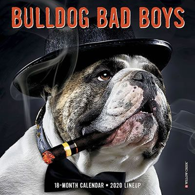 Bulldog Bad Boys 2020 Mini Calendar Bulldog Girl And Dog Bad Boys