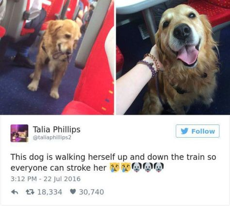 This very excellent dog who made sure to use her own leash. | 17 Dogs Who Are Very, Very Good Dogs