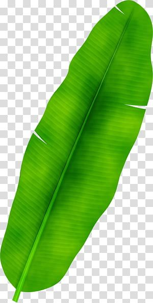 Banana Leaf Watercolor Paint Wet Ink Palm Trees Frond Drawing Palmleaf Manuscript Transparent Background Pn Leaf Illustration Leaves Illustration Leaves