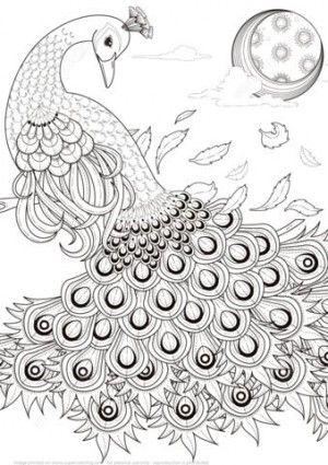 ร ปภาพการ ต นระบายส นกย ง Peacock Coloring Pages Detailed Coloring Pages Coloring Pages