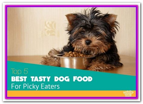 Best Healthy Dog Food For Picky Eaters Healthy Dog Food Recipes