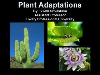 Plant Adaptations Plant Adaptations Adaptations Plants