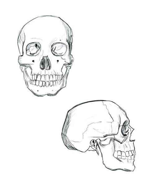 dibujo calavera realista - Dibujos Para Colorear - COLOREARTV.COM ...