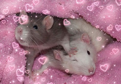 Find images and videos about pink, goth and cyber on We Heart It - the app to get lost in what you love. Baby Animals, Cute Animals, Le Vent Se Leve, Cute Rats, Indie Kids, Reaction Pictures, Aesthetic Pictures, Cute Babies, Cute Pictures