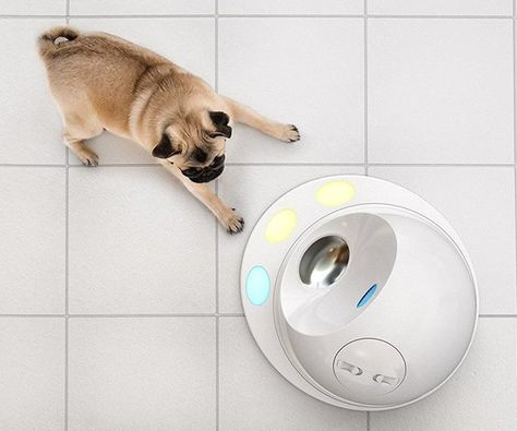 CleverPet – The Dog Engaging Treat Machine | Brain games for