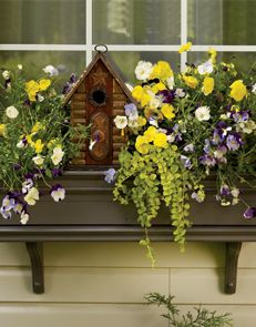 With Brightly Coloured Annuals And A Rustic Wooden Garden Accessory, Our