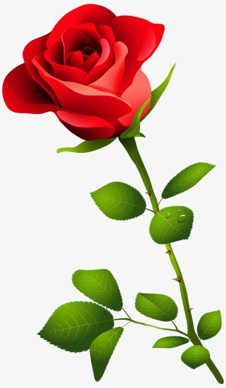 Bright Roses Rose Flower Wallpaper Rose Flower Png Flower Images