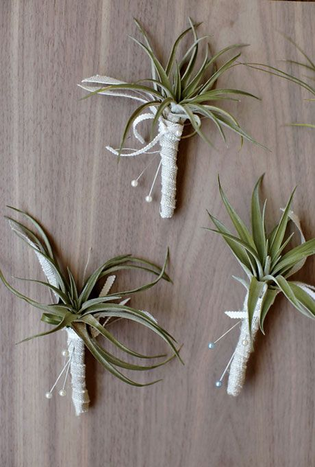 Flower Arrangements For a Destination Wedding  | Air Plant Boutonnieres | Photo by: Thayer Allison Gowdy