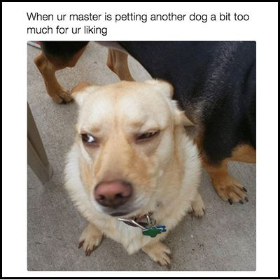 22 Dog Memes That Will Make You Laugh Out Loud Cat Memes Dog Quotes Animal Jokes