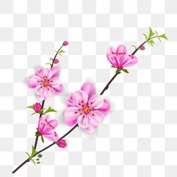 Letnie Rosliny Pozostawia Kwiaty I Rosliny Grupa Png I Plik Psd Do Pobrania Za Darmo