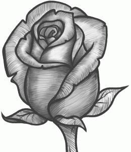 Now this rose looks good.You can go and try to draw another rose, but make it with your own shape.Give it your own special touches.