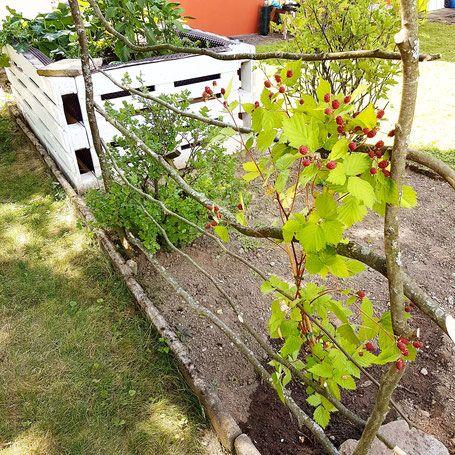 Top Rankgitter Himbeere Brombeere | Mein Garten / Eigenes Gemüse #TU_39