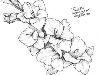 Jak Narysowac Mieczyk Olowkiem Etapami Rysowac Flower Drawing Gladiolus Flower Tattoos Gladiolus Tattoo