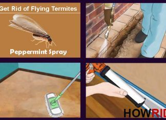 How To Get Rid Of Flying Termites Winged Termites Flying Termites Winged Termites Get Rid Of Flies