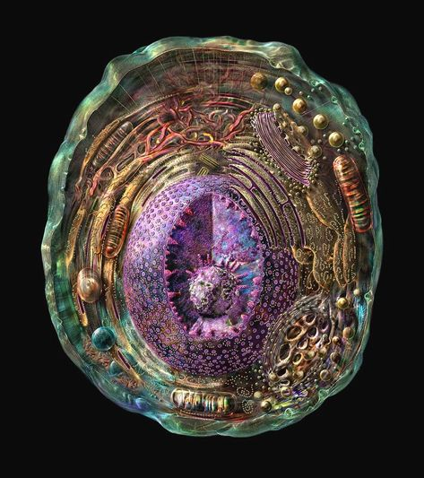 Animal Cell Photograph by Russell Kightley/science Photo Library Science Photos, Science Art, Life Science, Science And Nature, Biology Art, Cell Biology, Microscopic Photography, Animal Cell, Bio Art