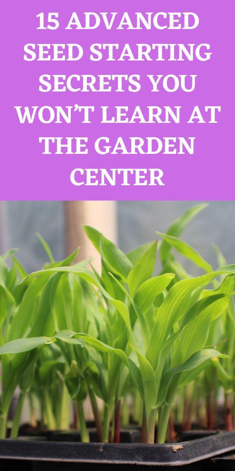 Garden Shrubs, Lawn And Garden, Garden Plants, Garden Seeds, Planting Seeds, Planting Flowers, Growing Plants, Growing Vegetables, Gardening For Beginners