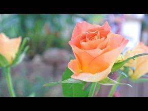 List Of Pinterest Heute Geburtstag Pictures Pinterest Heute