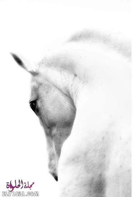 خلفيات بيضاء كيوت صور خلفيات بيضاء للموبايل عادة ما يبحث العديد من الأشخاص عن صور تعبر عن حالتهم ومن خلال قس In 2021 The Lady Of Shalott Historical Figures Historical