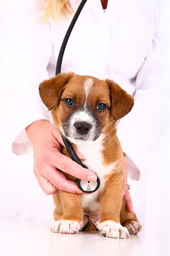 Good Puppy Health Starts Here In 2020 Healthy Pets Cheap Pet Insurance Pets