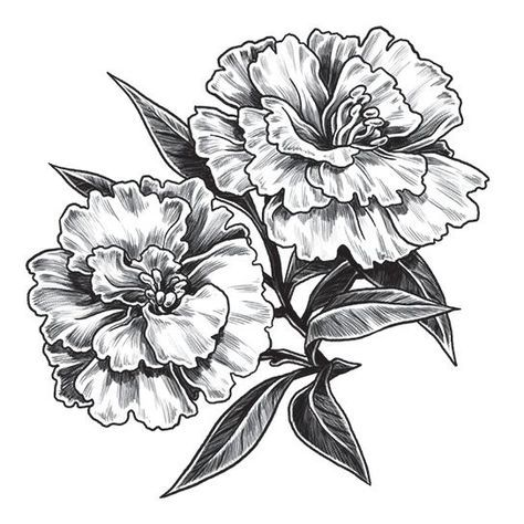 50 New Ideas For Flowers Tattoo Small Carnation In 2020 Flower Tattoo Shoulder Birth Flower Tattoos Carnation Flower Tattoo