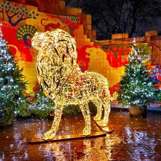 London Zoo At Christmas.More From London Zoo And Its Christmas Lights As The Pins