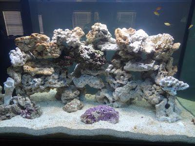 Pin By Jared Murphy On Saltwater Aquarium In 2020 Aquascape Saltwater Tank Reef Aquarium