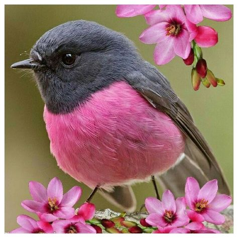 """Serendipity Loves on Instagram: """"PINK ~ my favourite colour. Well one of them. The birds are tweeting and the sun is shining, what more could we ask for.  Feeling pretty…"""""""