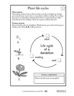 Plant Life Cycles 1st Grade 2nd Grade Kindergarten Science Worksheet Greatschools Plant Life Cycle Worksheet Plant Life Cycle Science Worksheets