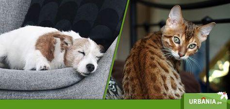 ¿Cuál prefieres como mascota? Perro vs Gato