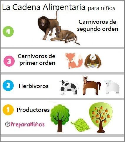 Cadena Alimentaria Para Niños De Primaria Proyectos De Animales Autotrofos Y Heterotrofos Clasificación De Animales