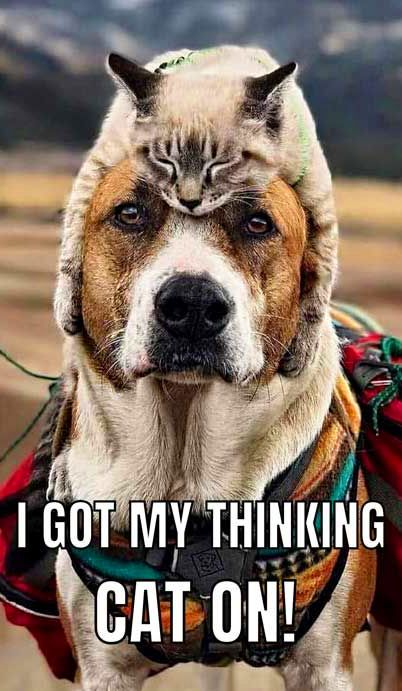 Funny Memes And Funny Pictures Please Subscribe To Have A Good Day An Exciting New Youtube Channel For Funny Animal Jokes Funny Dog Memes Funny Animal Memes