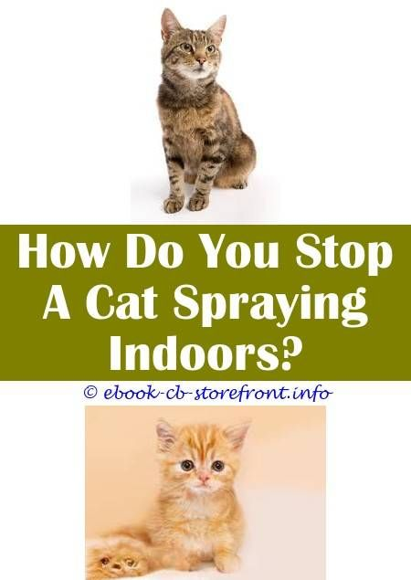 at what age do male cats stop spraying