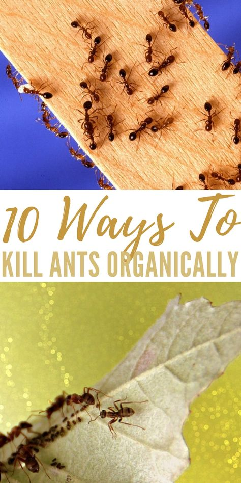 How To Get Rid Of Ants Once And For All Ants In Garden Ants