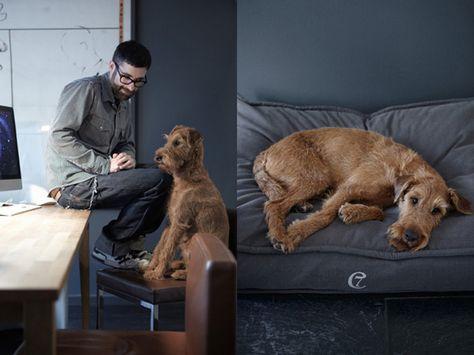Canine Comforts Dog Portraits Dog Lovers Designer Dog Beds