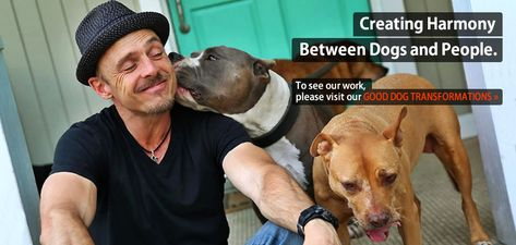 Los Angeles Dog Trainer Dog Aggression Training Dog Behavior