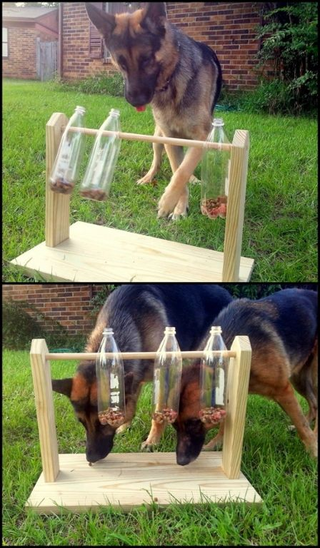 Keep your furry friends busy and entertained with this spinning plastic bottles dog treat game. Do you need one for your pets? - My Doggy Is Delightful Outdoor Dog Toys, Dog Playground, Playground Design, Dog Yard, Diy Dog Toys, Homemade Dog Toys, Smart Dog Toys, Dog Games, Brain Games For Dogs