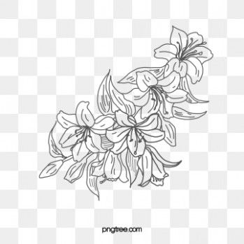 12 Disadvantages Of Flower Art Line Png And How You Can Workaround It Flower Art Line Png Https Ift Tt Flower Line Drawings Flower Drawing Line Art Flowers