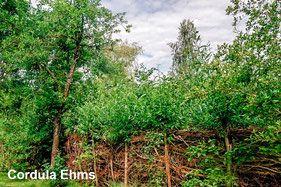 Totholz Totholzzaun Totholz Naturgarten Deadwood Wildlife Garden Naturgarten Garten Kleiner Garten