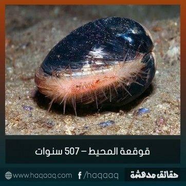 صور مكتوب عليها حقائق مدهشة Arabic English Quotes Pet Birds English Quotes