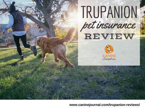 Trupanion Reviews What Makes This Pet Insurance Unique Dog