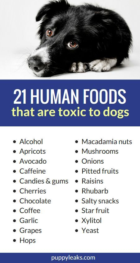 21 Human Foods That Are Toxic To Dogs Toxic Foods For Dogs Dog Nutrition Human Food