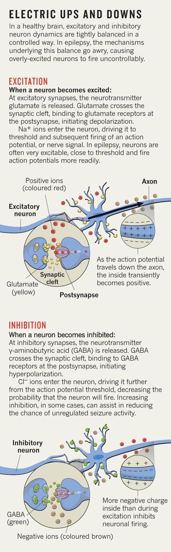 110 besten Brain Bilder auf Pinterest   Neurowissenschaften, Medizin ...